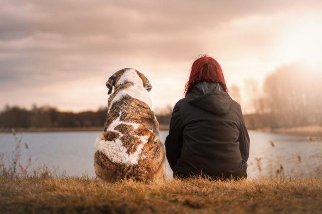meilleur ami chien